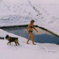 Не мое собачье дело :: Борис Гуревич