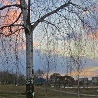 краски вечернего неба :: Елена