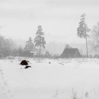 Туманный день весны :: Валерий Талашов