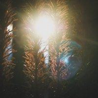 Скоро лето, ура!!! :: Света Кондрашова