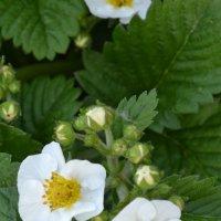 Весеннее цветение. :: zoja