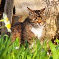 мартовский кот :: Ольга Cоломатина