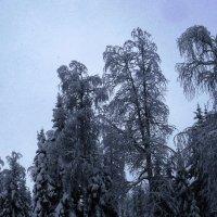 Зима :: petyxov петухов