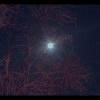 Задумывая тёмные дела на небе ухмыляется луна :: Дмитрий Чернов