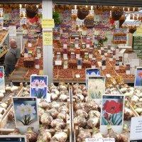 Цветочный рынок .Амстердам. :: Наталья Петракова