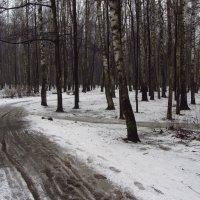 IMG_4105 - Тоже апрель :: Андрей Лукьянов