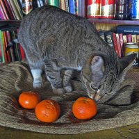Любовь к трём мандаринам ( Натюрмуррртр) :: muh5257