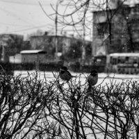 Весна ... :: Роман Шершнев