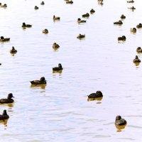 На озере :: Natalya секрет