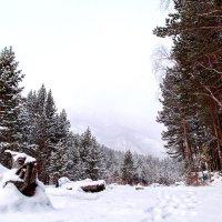 Зимний Аршан :: Павел Крутенко