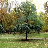Листопад в Удельном парке :: Вера