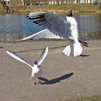 танцы у пруда :: linnud