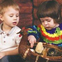 Цыплятки :: Елена Семёнова