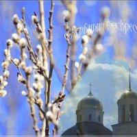 Аромат цветущей вербы :: galina tihonova