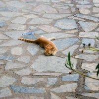 кошки :: EDO Бабурин