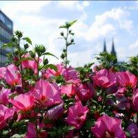 Цветы могут склоняться в нашу сторону, но говорят они с небом и богом. Г. Бичер. :: Anna Gornostayeva