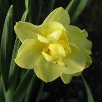 Есть у цветов особенная прелесть... :: ТАТЬЯНА (tatik)