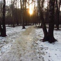 IMG_4258 - Под ногами хлюпает :: Андрей Лукьянов