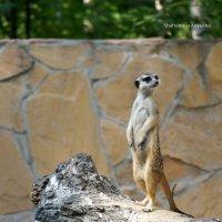 zoo :: Ksyusha Shafranova