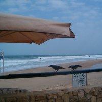 Море и вороны :: Герович Лилия