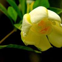 Цветок. :: сергей