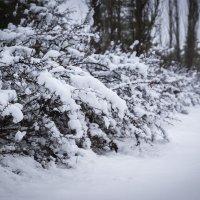 Снежный апрель :: Dina Ross