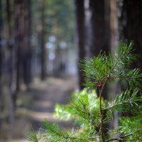 лесные зарисовки :: Андрей Герасимов