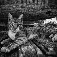 Кот экскаваторщик :: Андрей Дыдыкин