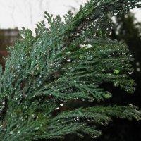 Капли дождя :: Александра Кривко