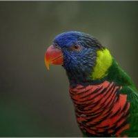Куала-Лумпурский парк птиц...Малайзия. :: Александр Вивчарик