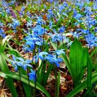 Апрельские цветы. :: Чария Зоя