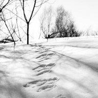 Апрельские следы :: Евгения Каравашкина