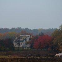 Хмурая осень... :: Вика К.