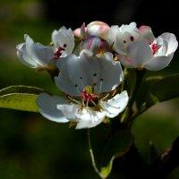 Весна... :: Любовь