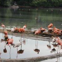 розовый фламинго :: Елена Резникова