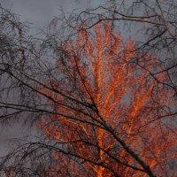 Отражение заката :: Gleipneir Дария