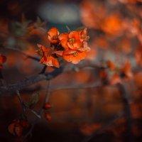 весна :: Александр Идикеев