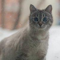 Кот смотрит в окно. :: Александр. Даренский.