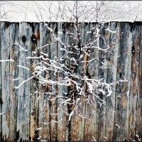 сквозь забор.зима нас не покинула.ночью выпал снег. :: Юрий Ефимов