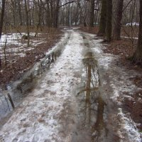 IMG_4416 - Всё еще сомневаетесь, что весна? :: Андрей Лукьянов
