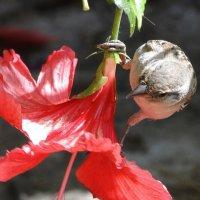 Воробей и цветок :: Елена Шемякина