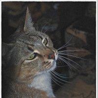 A я такая, блин, такая-растакая,когда котик пришёл... :: muh5257