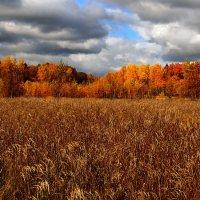 Золотая осень :: Максим Сорокин
