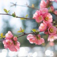 Весна :: Денис Финягин