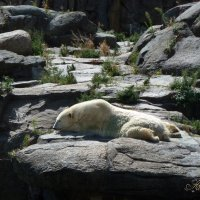 Я на солнышке лежу... :: Наталья Петракова