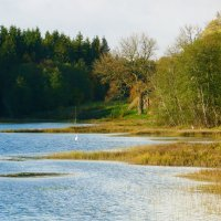 осень на озере :: Светлана