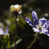 Весна радует :: Александра Кривко