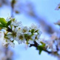 Весна на Кубани.. :: Ксения Заводчикова