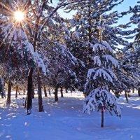 Зимнее утро :: Ксения Троеглазова