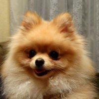 Мой гость Микки... :: Тамара (st.tamara)